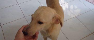 Questo cane è stato trovato abbandonato e legato in uno scoglio