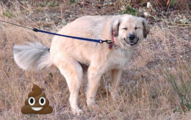 01-why-your-dog-stares-at-you-while-pooping