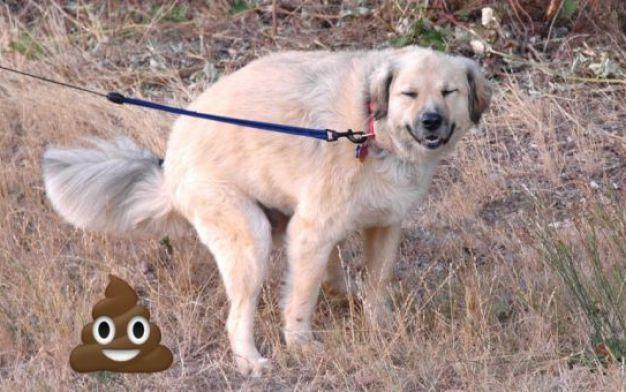 Perché i cani ci fissano negli occhi mentre fanno la cacca?