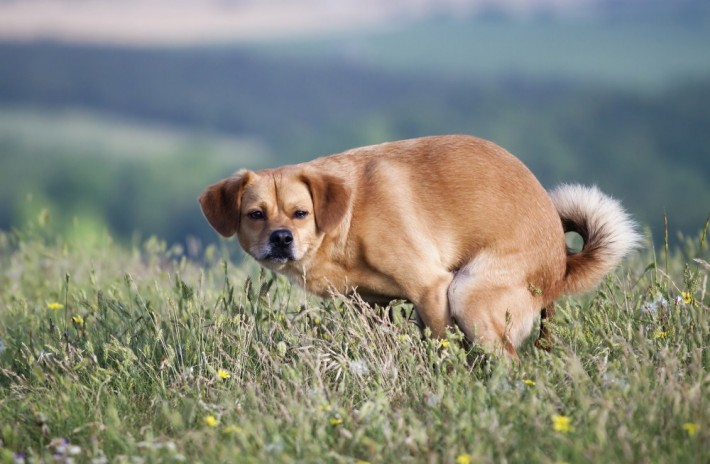03-why-your-dog-stares-at-you-while-pooping-710x464