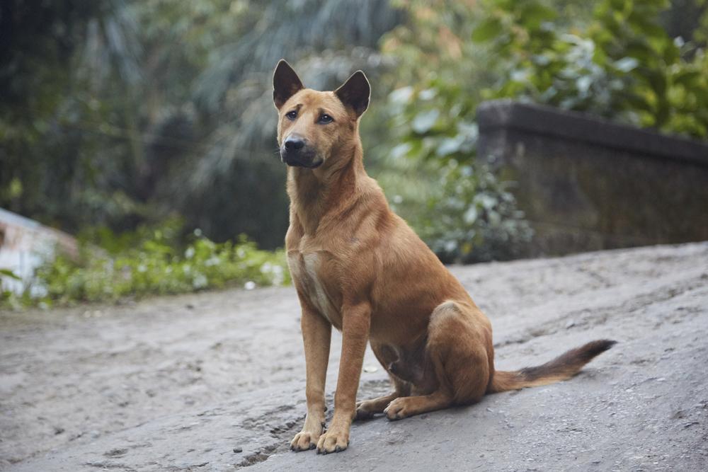 Come insegnare al tuo cane a camminarti a fianco e a smettere di tirare al guinzaglio!