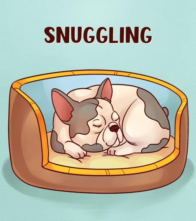 6 Posizioni di sonno del cane che rivelano qualcosa di straordinario sulla sua personalità!