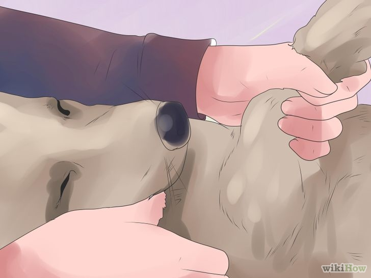728px-bond-with-your-dog-step-15
