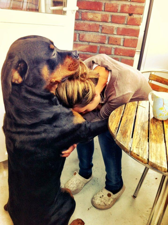 dog-comforts-his-best-friend-while-giving-her-a-shoulder-to-cry-on