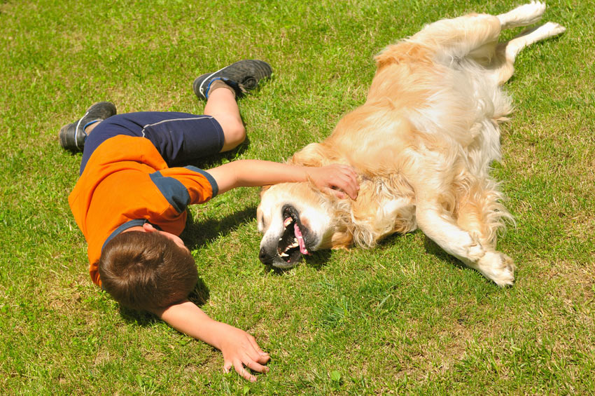 dog-dog_guide-a_young_boy_rolling_around_on_the_grass_with_his_golden_retriever