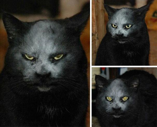 10 Gatti che dimostrano di essere dei veri e propri demoni malefici!