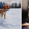 evil-cats-demons-summoning-satan-fb