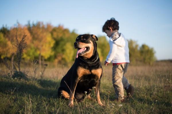 Cani intelligenti: le 10 razze più dotate al mondo