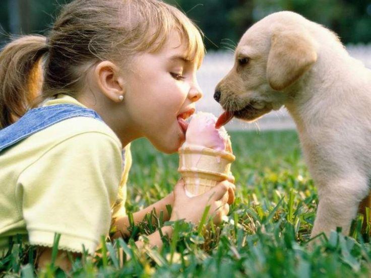 Dopo aver visto queste foto non vorrete più un cane in casa