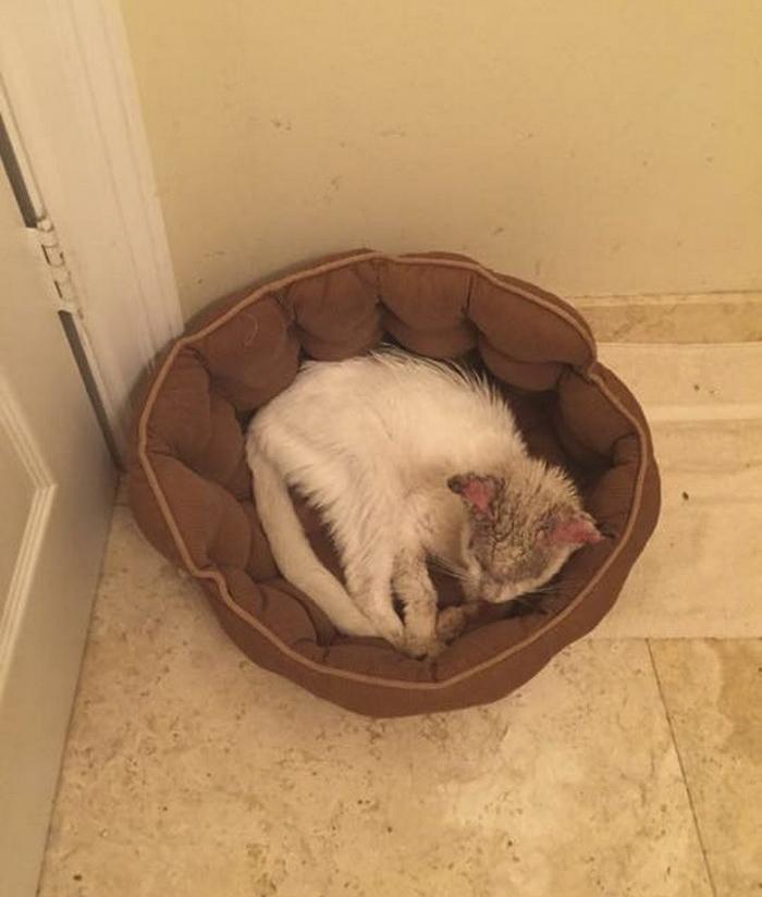 """Questo gatto randagio """"cieco"""" sorprende tutti quando rivela l'incredibile bellezza dei suoi occhi"""
