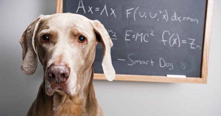 Vuoi calcolare gli anni del cane in anni umani? Ecco come si fa