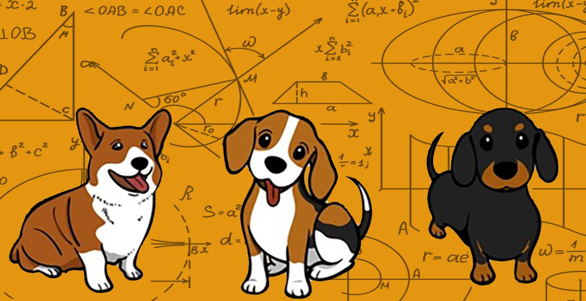 Calcolo degli anni del cane
