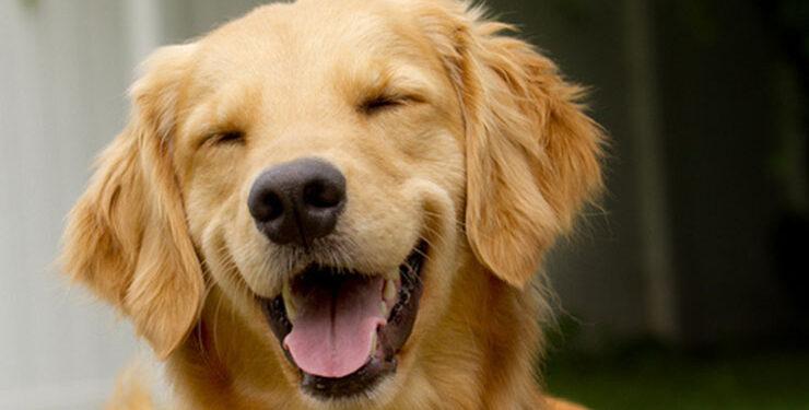 Il tuo cane è felice? Ecco 5 modi per capirlo