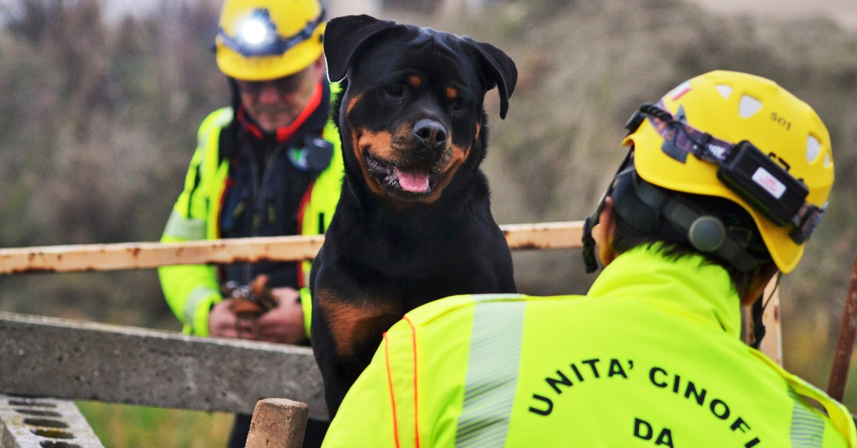 cane addestrato al soccorso umano