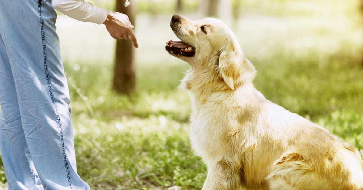 cane che fa addestramento