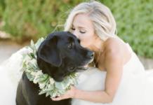 cani e matrimonio