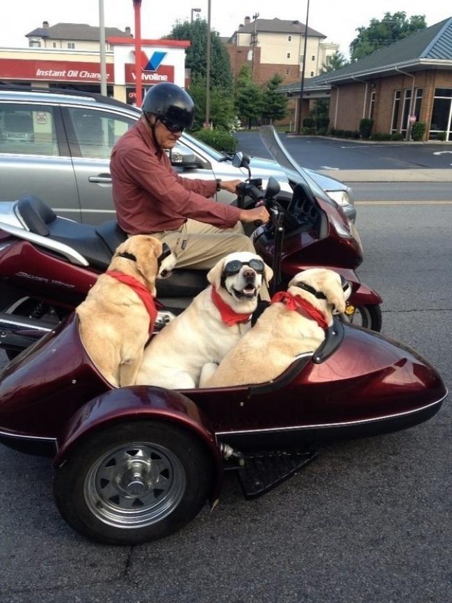 10 Insegnamenti del tuo cane che ti aiutano ad affrontare le giornate in modo positivo