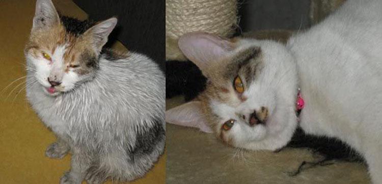 15 Gatti prima e dopo essere stati adottati