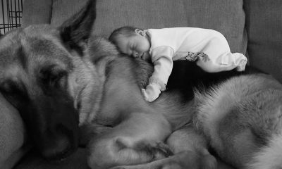 cute-big-dogs-and-babies-fb