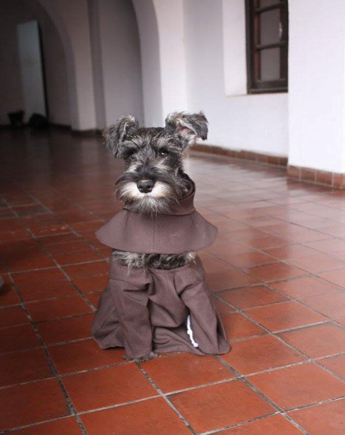 Esiste un cane monaco: si chiama Frate Bigotón