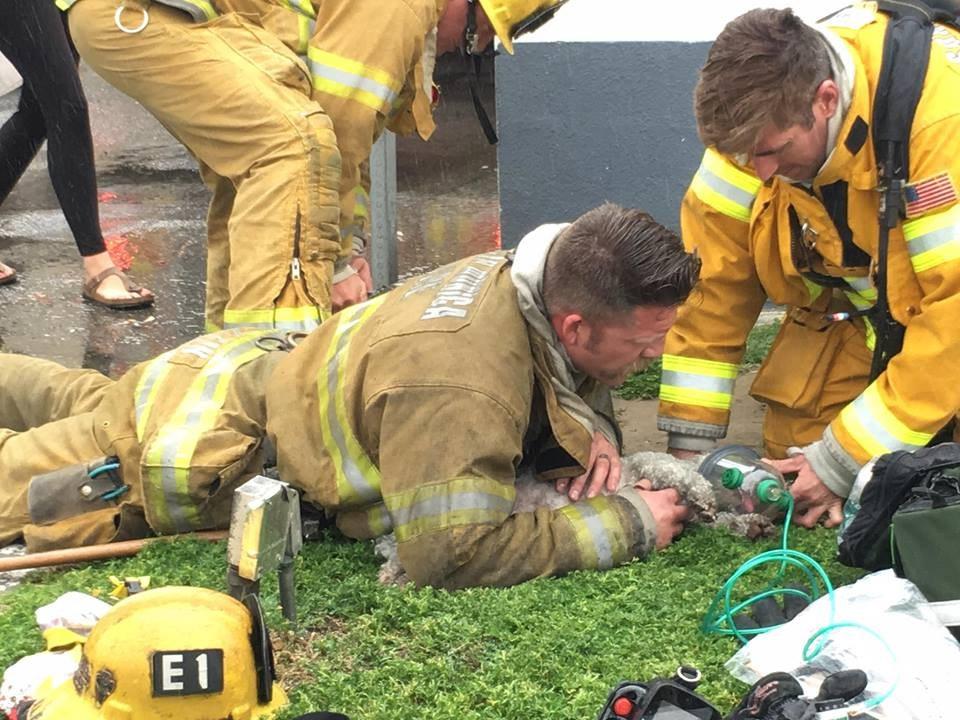 Pompiere fa la respirazione bocca a bocca ad un cane che era rimasto intrappolato in una casa in fiamme