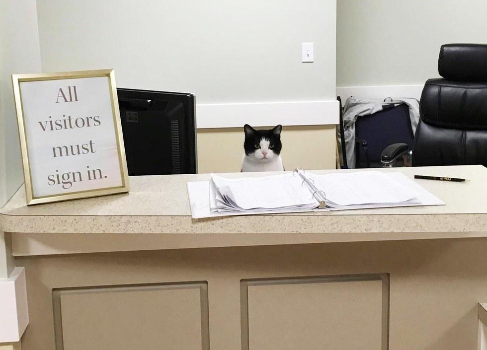 Questo gatto randagio si aggira in una casa di cura e decide di fare qualcosa di speciale lì...