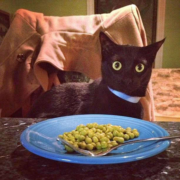 6 Vegetali con proprietà straordinarie da far provare almeno una volta al vostro Gatto!