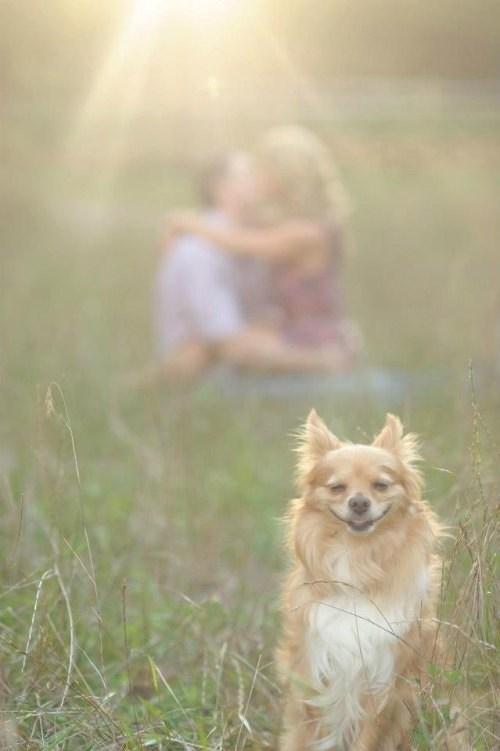 6 cose che confermano la tua ossessione per il tuo cane!
