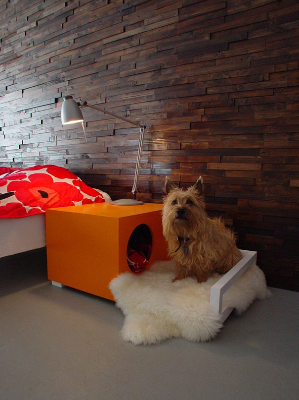 10+ Idee Regalo super creative per il tuo cane!