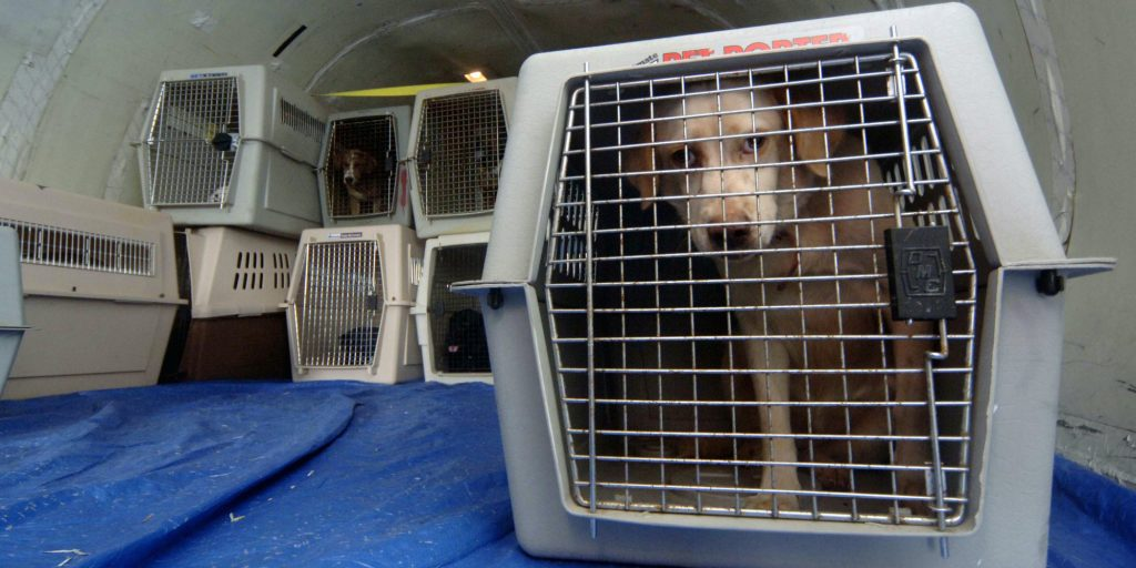 HATTIESBURG, MS - SEPTEMBER 22: Rescued pets wait in cages aboard a plane for transport to St. Louis, Missouri, September 22, 2005 in Hattiesburg, Mississippi. The pets will be taken in by foster owners until they can be reunited with their owners or placed for permanent adoption. Together the United States Humane Society and the Humane Society of Missouri have rescued thousands of pets since Hurricane Katrina devastated the Mississippi Gulf Coast and New Orleans. (Photo by Marianne Todd/Getty Images)