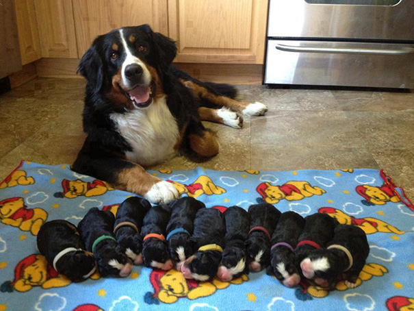 10+ Mamme orgogliose con i loro cuccioli