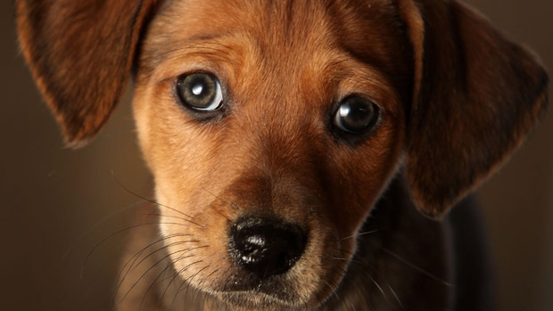 """10 modi segreti in cui il tuo cane ti dice """"Ti amo""""!"""