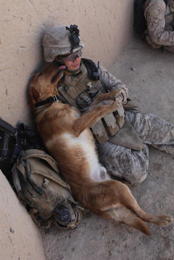 10+ Foto Straordinarie di Cani di Servizio che mostrano la loro incredibile fedeltà