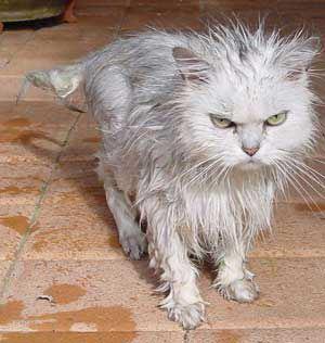 6 Cose che il vostro gatto non sopporta di voi