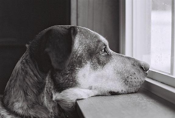 Ecco cosa pensa realmente di te il tuo cane. Attenzione, queste parole potrebbero commuovervi fino alle lacrime.