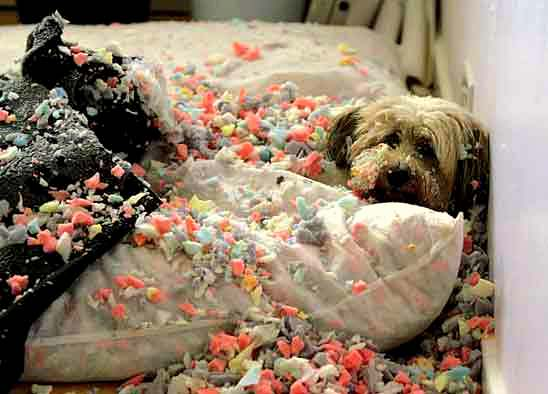2-20-15-dogs-who-are-proud-they-trashed-your-house8
