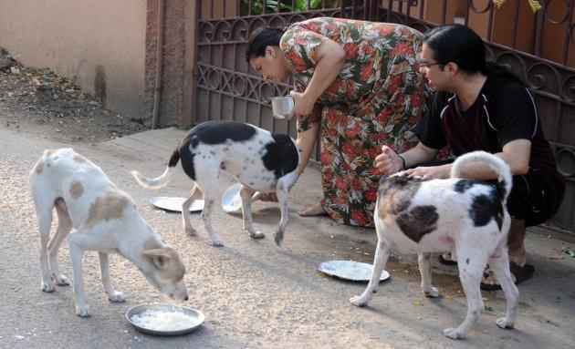 Chi dà da mangiare a un cane randagio e viene morso, diventa responsabile penalmente e civilmente dell'animale!