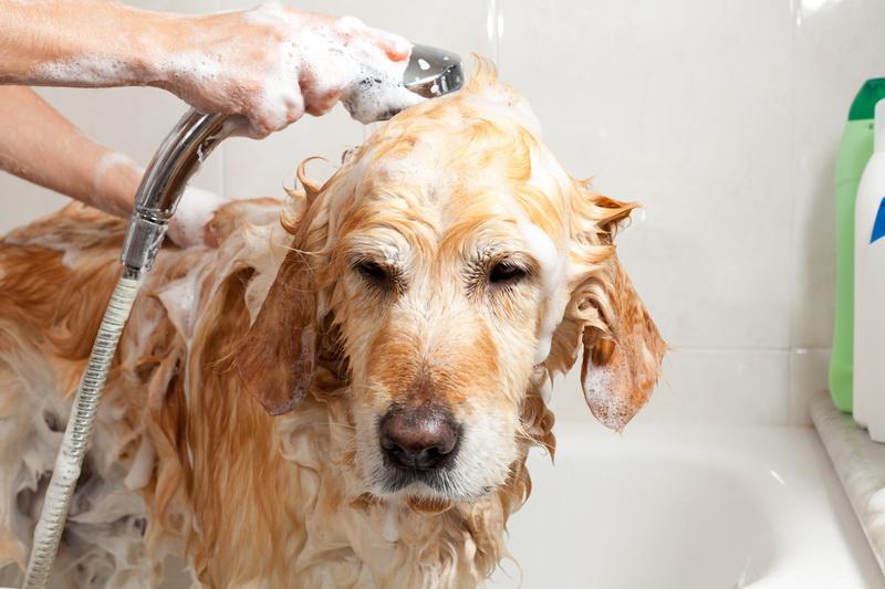 5 Modi per migliorare l'odore del tuo cane
