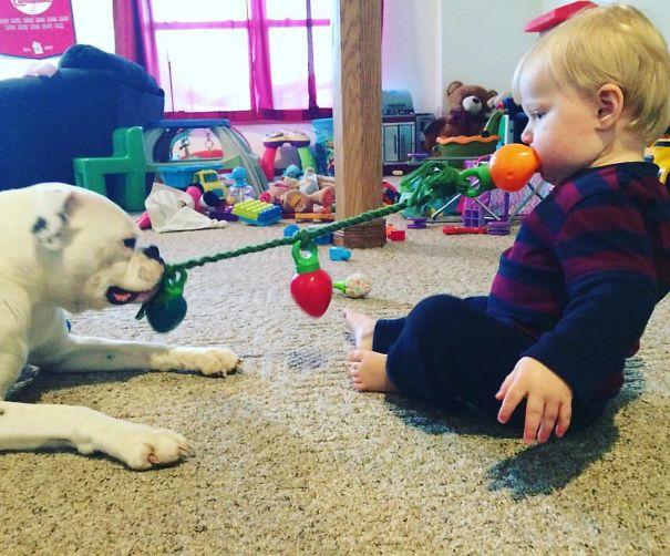 10 Motivi per cui non dovresti mai lasciare il tuo cane da solo con dei bambini