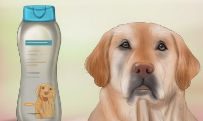 728px-make-your-dog-smell-better-step-1-version-3