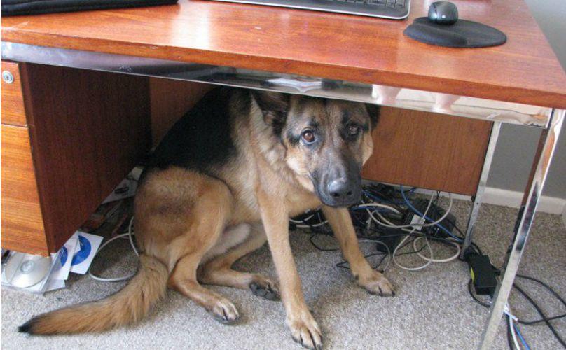 animal-earthquake-prediction-dog