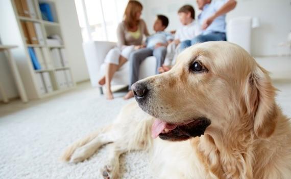come-eliminare-cattivi-odori-animali-casa-990x470-c