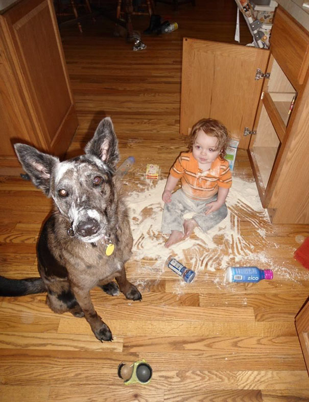 funny-kids-babysitting-pets-5-58f71e7cf05da__605
