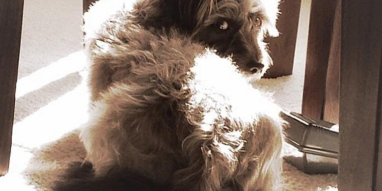 8 Motivi per cui le scoregge del vostro cane puzzano così tanto!