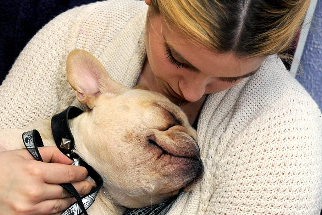 """For Health Supplement: 11/09/13:Therapy Dog Class: New York - Winston, a French bulldog, gets a hug from his owner Kate Siller at a therapy dog class titled """"Go Say Hi"""" at 75th & Paws on E. 75th St. The class, given by Michele Siegel, helps dog owners learn to share the bond between their dog with others. Photo by Helayne Seidman"""