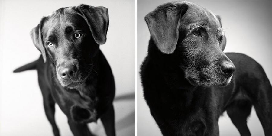 Ecco come invecchiano i cani: Un progetto fotografico affascinante e molto profondo!