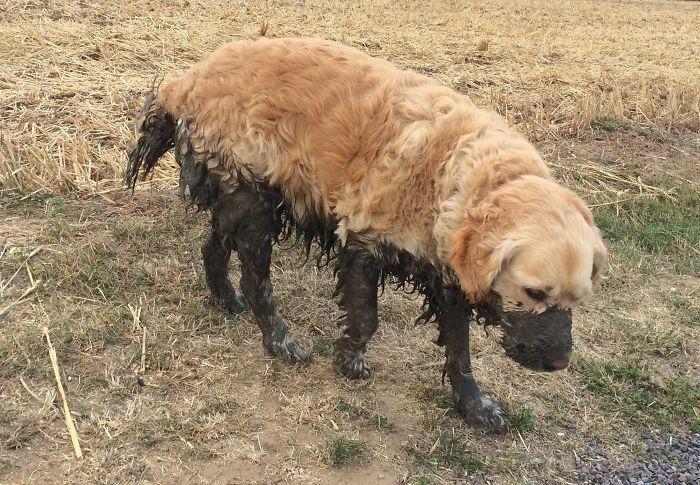 10 Ragioni per cui non dovresti mai lasciare il tuo cane giocare nel fango