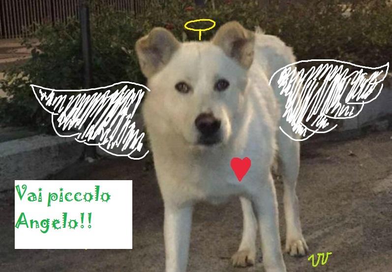Condanna esemplare per gli assassini del cane Angelo: 4 condanne con il massimo della pena!