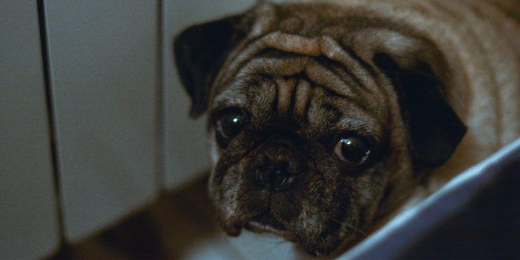 4 cose che fanno paura ai cani!
