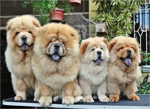 Quali colori vedono i cani?